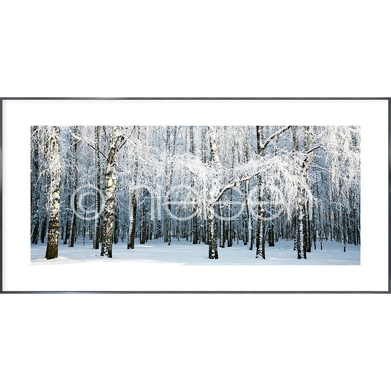"Indrammet billede ""Birch Forest Snow"" med aluramme Alpha"