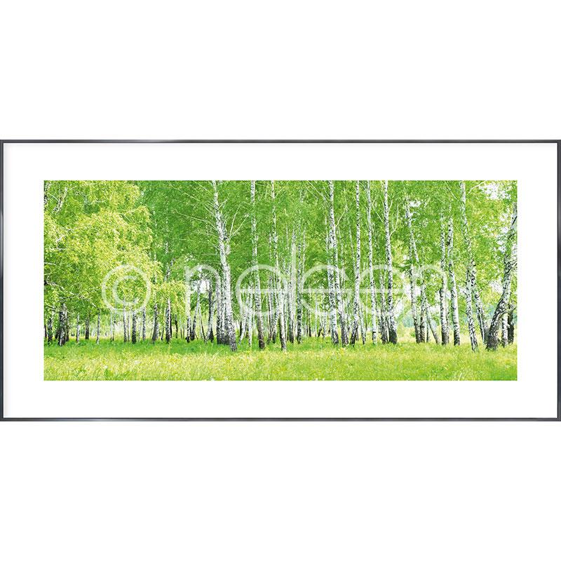"Indrammet billede ""Birch Forest"" med aluramme Alpha"