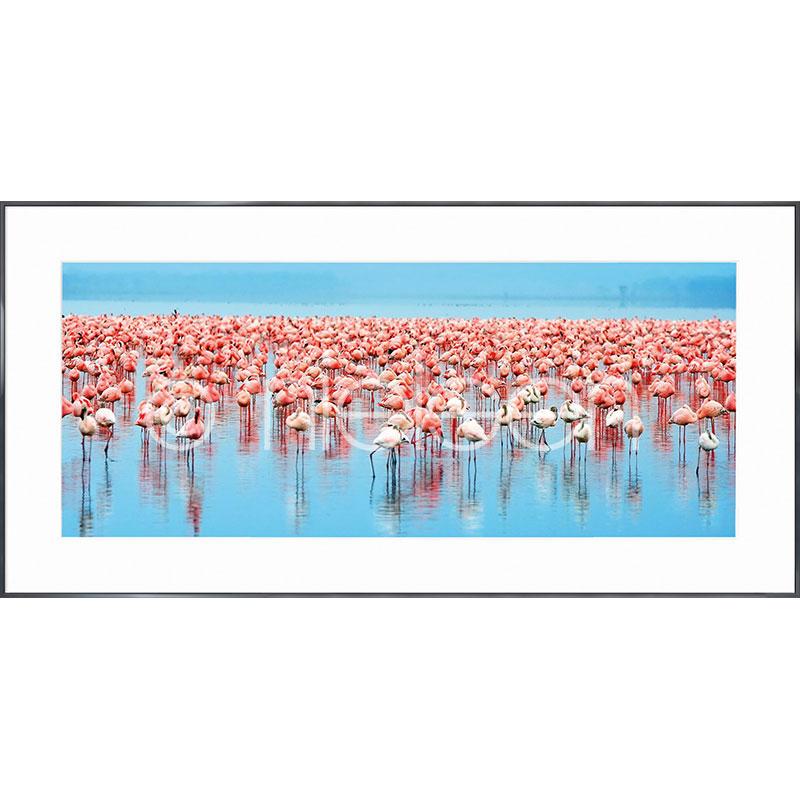 """Indrammet billede """"Flamingos"""" med aluramme Alpha"""