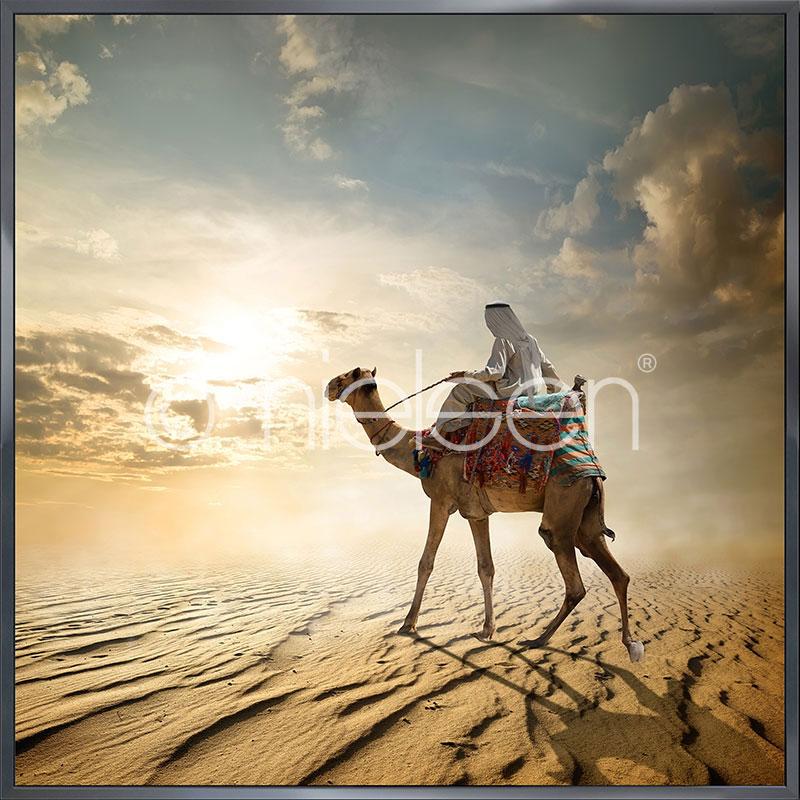 """Indrammet billede """"Cameleer"""" med aluramme Alpha"""