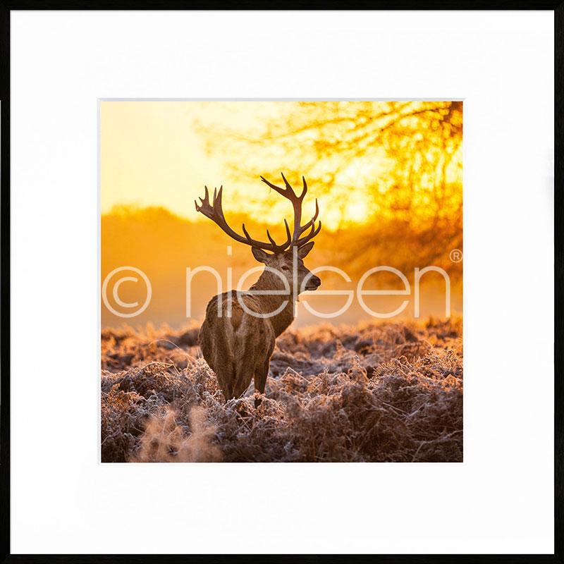 """Indrammet billede """"Cervine Sunset"""" med aluramme C2"""