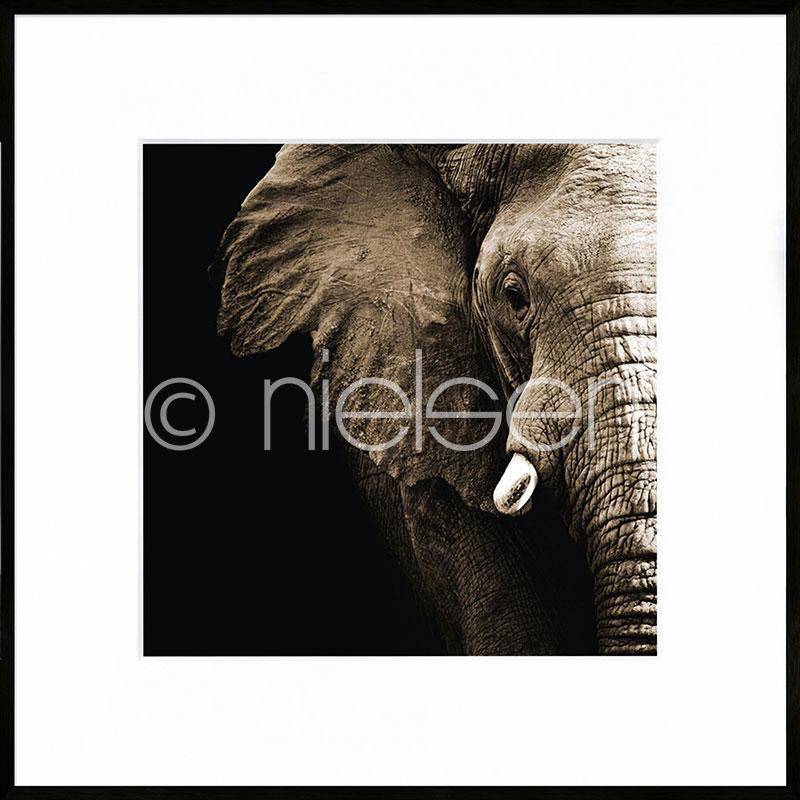 """Indrammet billede """"Elephant"""" med aluramme C2"""