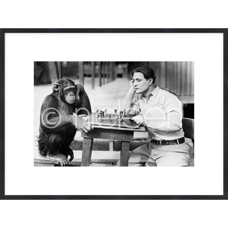 """Indrammet billede """"Monkey chess"""" med træramme Quadrum"""