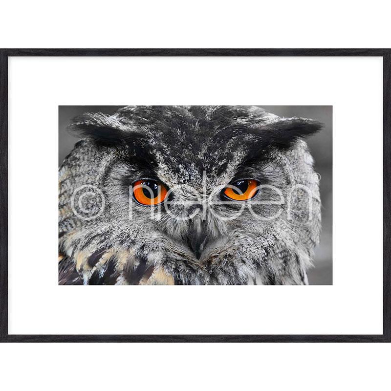 """Indrammet billede """"Owl"""" med træramme Quadrum"""