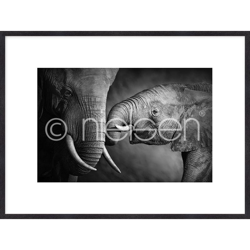 """Indrammet billede """"Elephant Baby"""" med træramme Quadrum"""