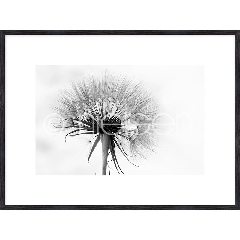 """Indrammet billede """"Dandelion abstract"""" med træramme Quadrum"""