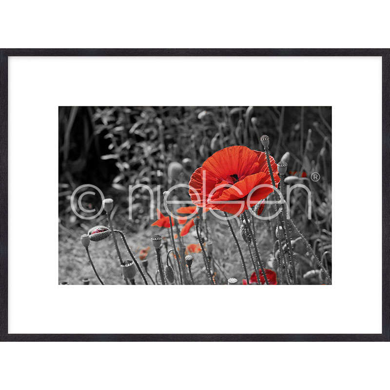 """Indrammet billede """"Red Poppy Flower"""" med træramme Quadrum"""