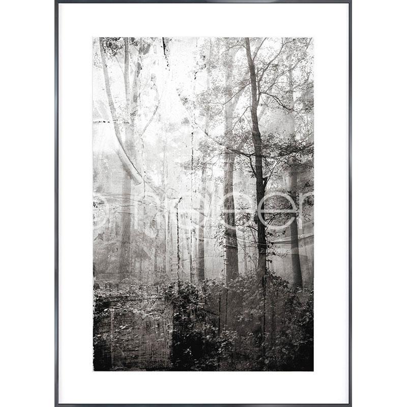 """Indrammet billede """"Forest Black and White"""" med aluramme Alpha"""
