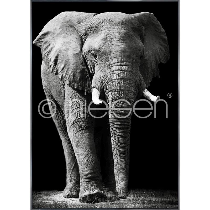"""Indrammet billede """"Elephant black and white"""" med aluramme Alpha"""