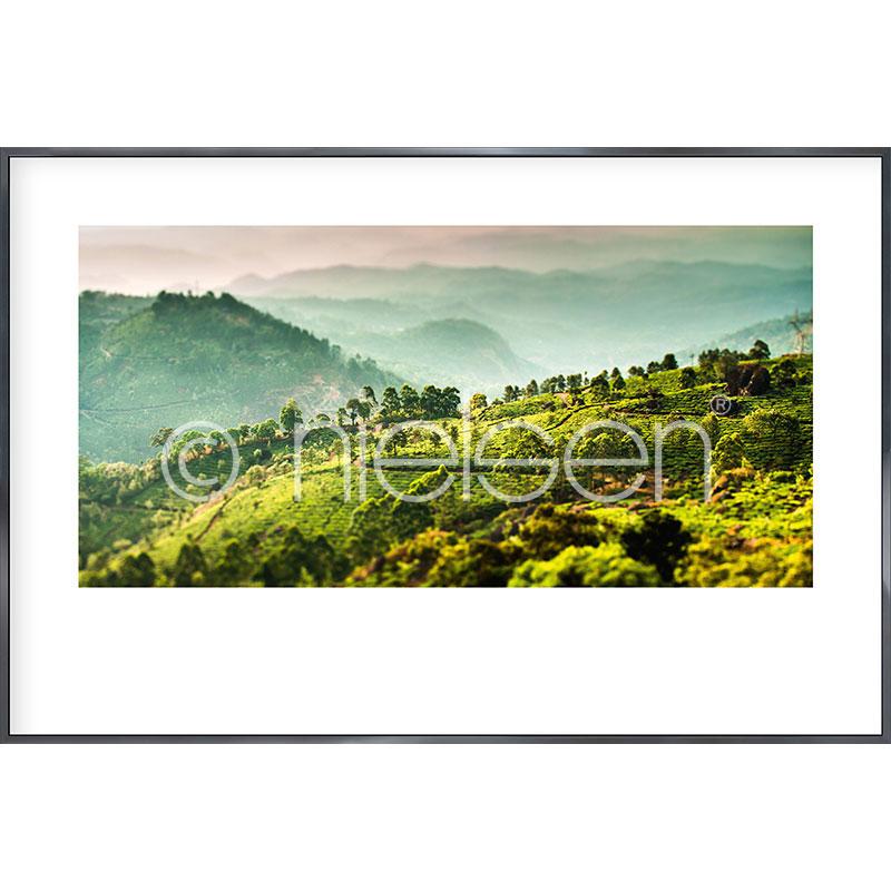"""Indrammet billede """"Landscape of Tea Plantations"""" med aluramme Alpha"""