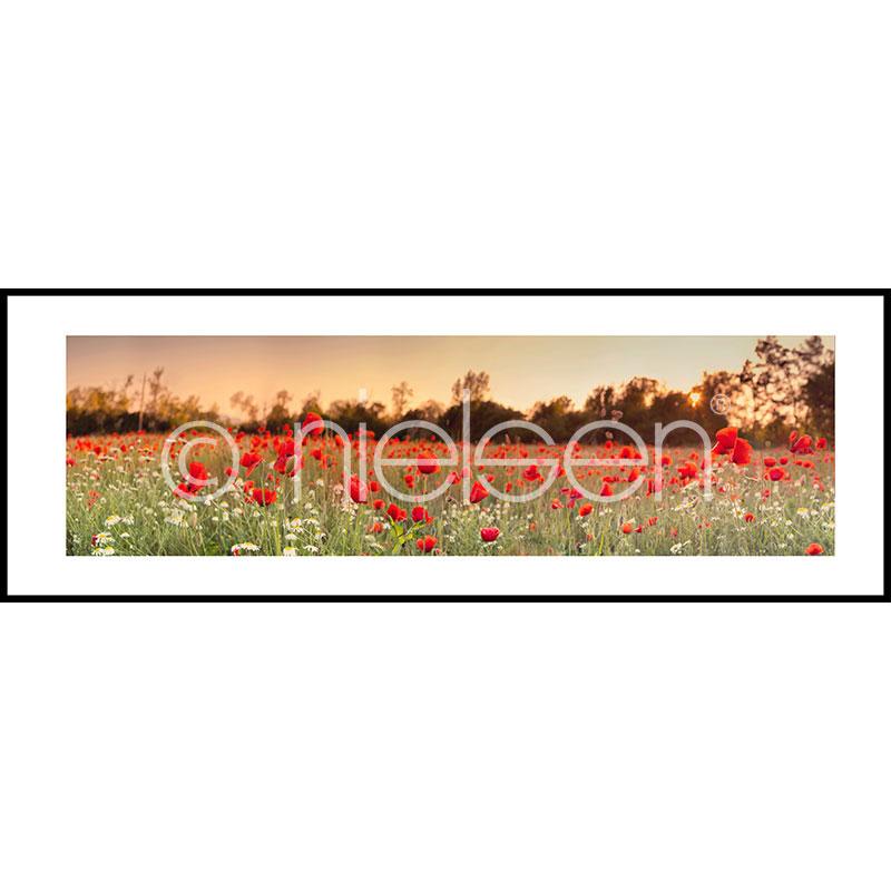 "Indrammet billede ""Poppy Flower Field"" med aluramme C2"