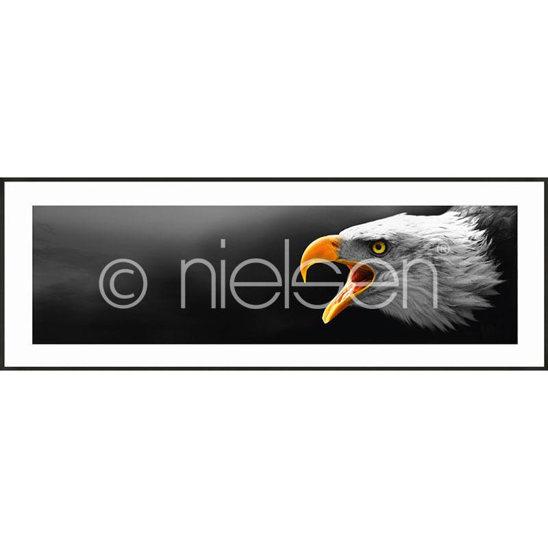 """Indrammet billede """"Eagle"""" med aluramme C2"""