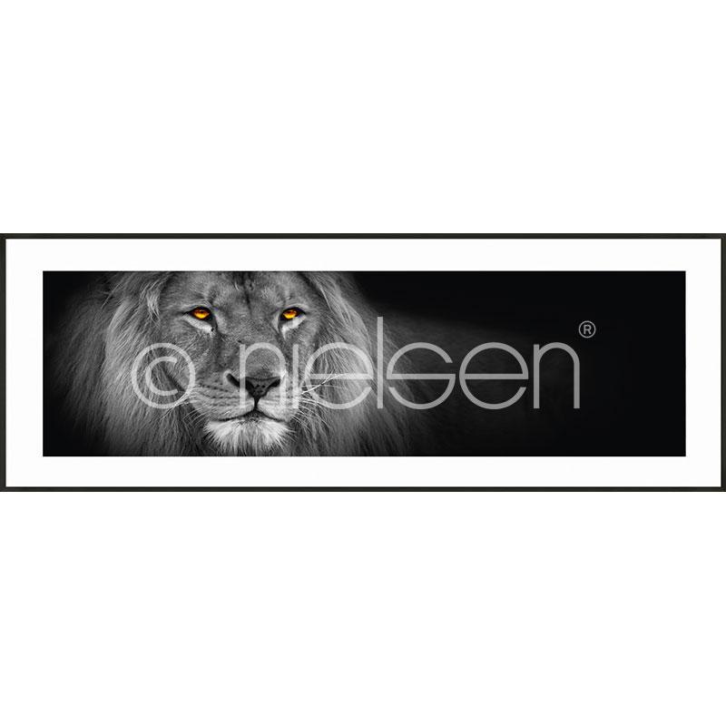 """Indrammet billede """"Lion black and white"""" med aluramme C2"""